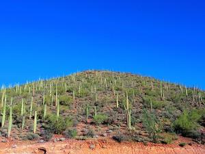 砂漠といえばサボテン!